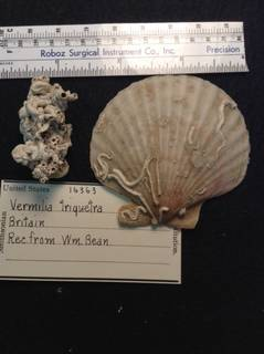 To NMNH Extant Collection (USNM 16363 Specimen-1)