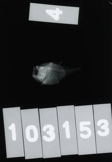 To NMNH Extant Collection (Polyipnus unispinus RAD115161-001)