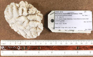 To NMNH Extant Collection (IZ USNM 48103 top view)