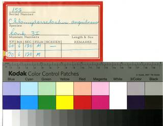 To NMNH Extant Collection (Chlamydoselachus anguineus RAD109950 Envelope)