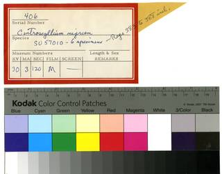 To NMNH Extant Collection (Centroscyllium nigrum RAD109974 Envelope)