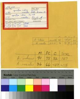 To NMNH Extant Collection (Apristurus RAD110178 thru RAD110179 Envelope)