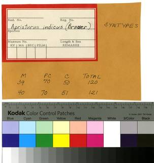 To NMNH Extant Collection (Scylliorhinus indicus RAD110181 Envelope)