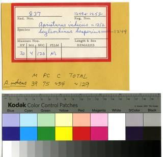 To NMNH Extant Collection (Scyliorhinidae RAD110222 and RAD110223 Envelope)