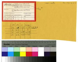 To NMNH Extant Collection (Apristurus riveri RAD110253 thru RAD110256 Envelope)