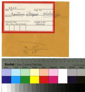 To NMNH Extant Collection (Scyliorhinus sibogae RAD110258 Envelope)
