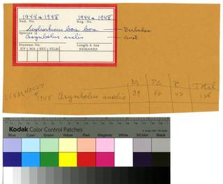 To NMNH Extant Collection (Scyliorhinidae RAD110263 and RAD110264 Envelope)