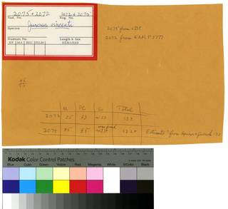 To NMNH Extant Collection (Asymbolus vincenti RAD110265 and RAD110266 Envelope)