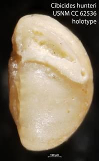 To NMNH Paleobiology Collection (Cibicides hunteri USNM CC 62536 holotype)