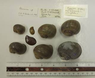 To NMNH Extant Collection (USNM 1418254)
