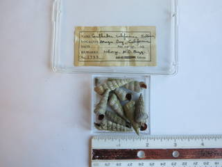 To NMNH Extant Collection (JPEM 02733)