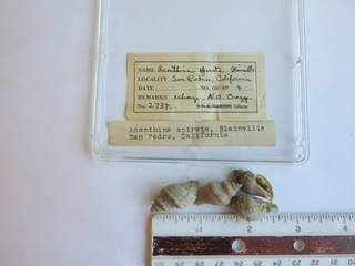 To NMNH Extant Collection (JPEM 02734)