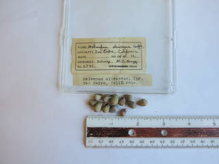 To NMNH Extant Collection (JPEM 02741)