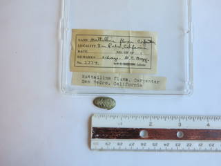 To NMNH Extant Collection (JPEM 02774)