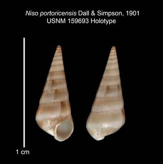 To NMNH Extant Collection (IZ MOL 159693 Holotype shell)