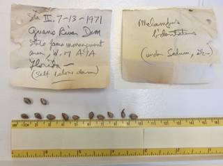 To NMNH Extant Collection (USNM 1436755-56)