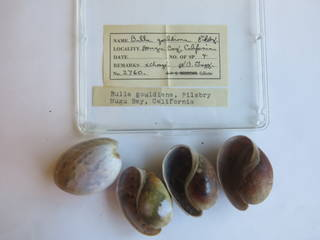 To NMNH Extant Collection (USNM 1436796)
