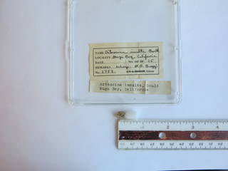To NMNH Extant Collection (USNM 1436798)
