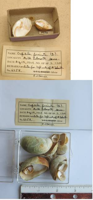 To NMNH Extant Collection (USNM 1437044)