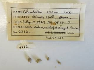 To NMNH Extant Collection (USNM 1437097)