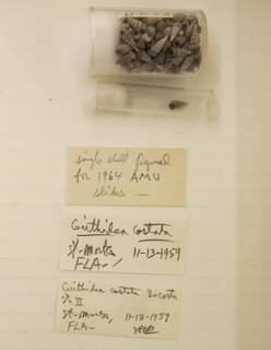 To NMNH Extant Collection (USNM 1437254)