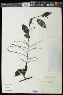 To NMNH Extant Collection (01875808)