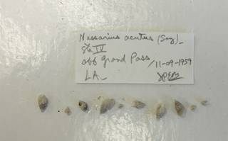 To NMNH Extant Collection (USNM 1437332)