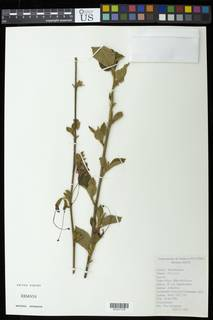 To NMNH Extant Collection (01317173)