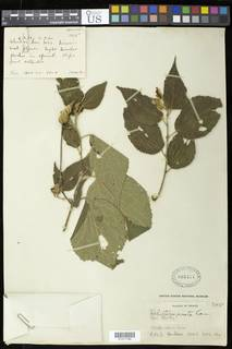To NMNH Extant Collection (01317186)