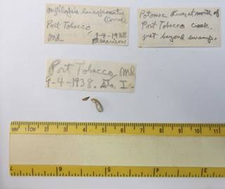 To NMNH Extant Collection (USNM 1438808)
