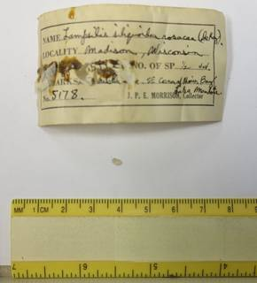 To NMNH Extant Collection (JPEM 5178)