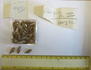 To NMNH Extant Collection (USNM 1438901)