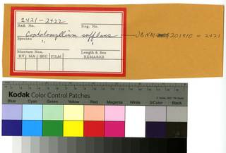 To NMNH Extant Collection (Cephaloscyllium sufflans RAD110287 and RAD110288 Envelope)