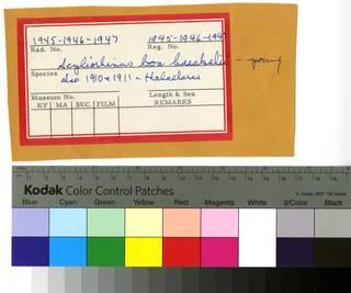 To NMNH Extant Collection (Scyliorhinidae RAD110475 thru RAD110479 Envelope)