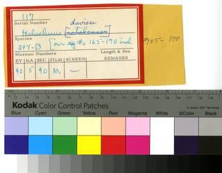 To NMNH Extant Collection (Halaelurus RAD110524 Envelope)