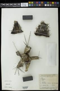 To NMNH Extant Collection (00171126)