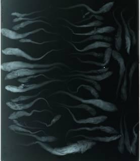 To NMNH Extant Collection (Parmaturus stenseni RAD110613-001)