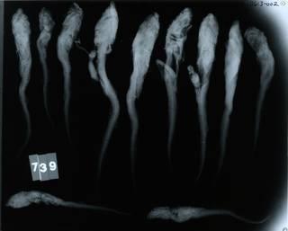 To NMNH Extant Collection (Parmaturus stenseni RAD110613-002)