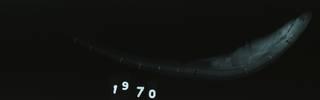 To NMNH Extant Collection (Scyliorhinus haeckelii RAD110640-001)