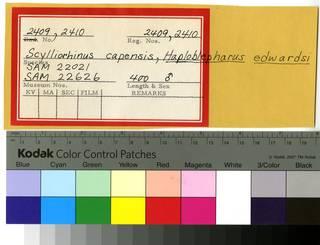 To NMNH Extant Collection (Scyliorhinidae RAD110581 and RAD110582 Envelope)
