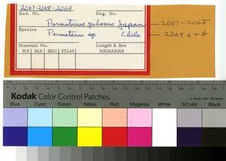 To NMNH Extant Collection (Parmaturus RAD110593 thru RAD110595 Envelope)
