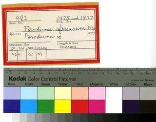 To NMNH Extant Collection (Poroderma RAD110616 and RAD110617 Envelope)