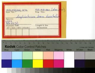 To NMNH Extant Collection (Scyliorhinus haeckelii RAD110623 and RAD110640 Envelope)