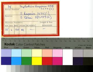 To NMNH Extant Collection (Scyliorhinus RAD110651 thru RAD110653 Envelope)