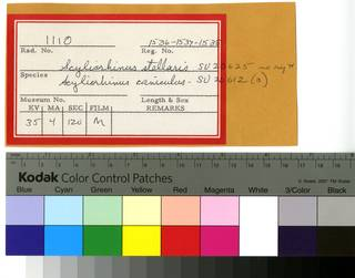 To NMNH Extant Collection (Scyliorhinus RAD110688 and RAD110689 Envelope)