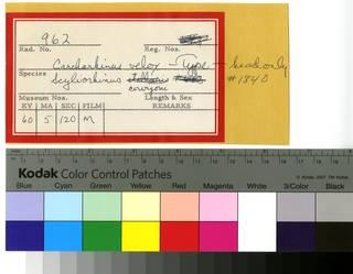 To NMNH Extant Collection (Scyliorhinus and Carcharhinus RAD110690 and RAD110691 Envelope)