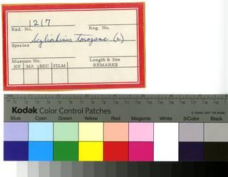 To NMNH Extant Collection (Scyliorhinus and Etmopterus RAD110694 and RAD110695 Envelope)