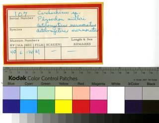 To NMNH Extant Collection (RAD110714 thru RAD110717 Envelope)