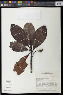 To NMNH Extant Collection (01890549)
