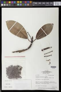 To NMNH Extant Collection (01890550)